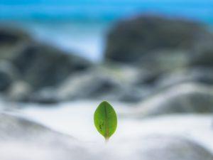 Una hoja de la esperanza en la orilla del mar