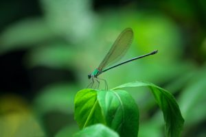 Green damselfly in the forest
