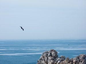 Flight of albatross