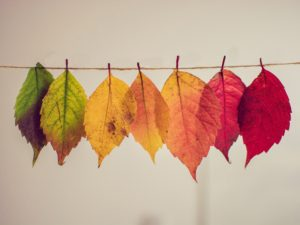 Color gradients of autumn leaves