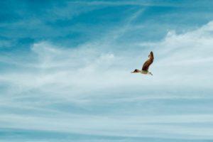 El vuelo de un pájaro