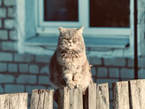 Gray cat on a wooden fence