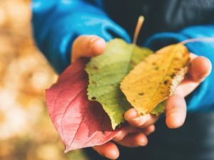 Red, green, and yellow leaves on boy's hands