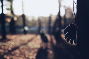 Child's glove on tree