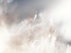 Macro shot of White Feather