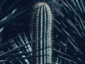 Green cactus plant; Arizona Garden, Stanford, United States