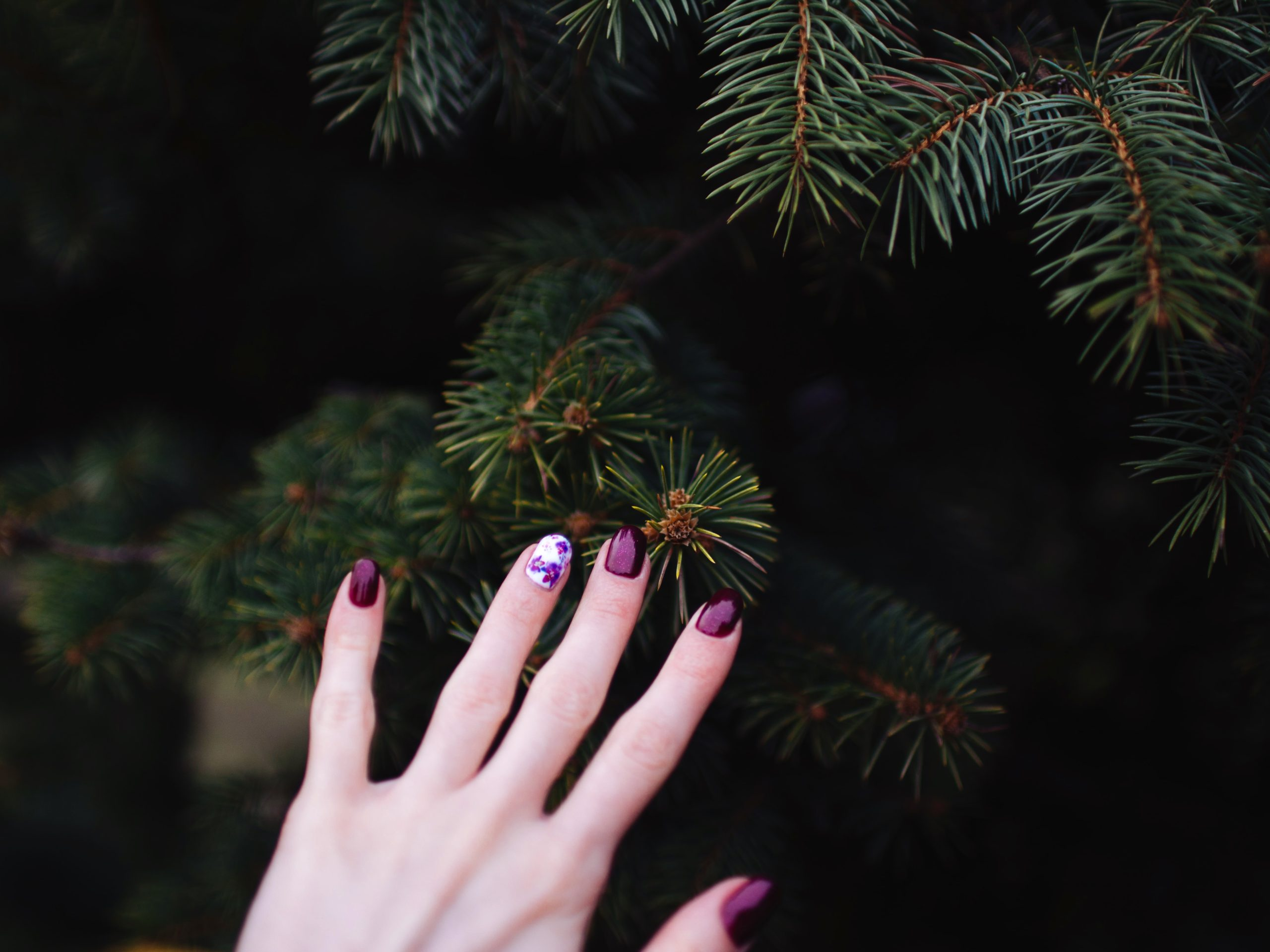 Touching the fir tree with red nail fingers